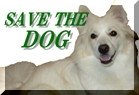 今の日本のペット社会が抱える多くの問題に目を向けていきませんか?Save The Dog(札幌)